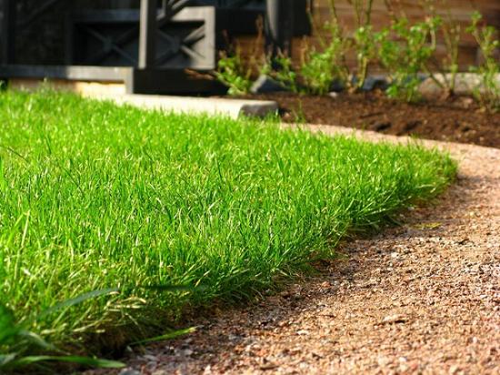 Как вырастить газон: этапы создания